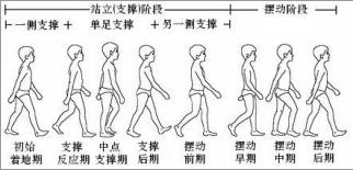 步行周期.png